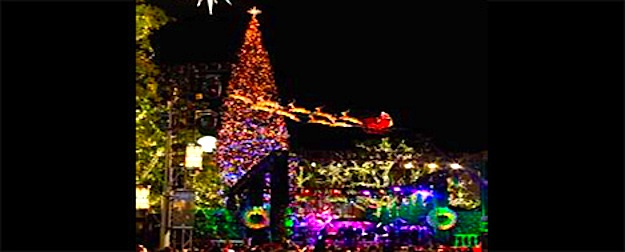 Christmas Tree Lighting at the Grove