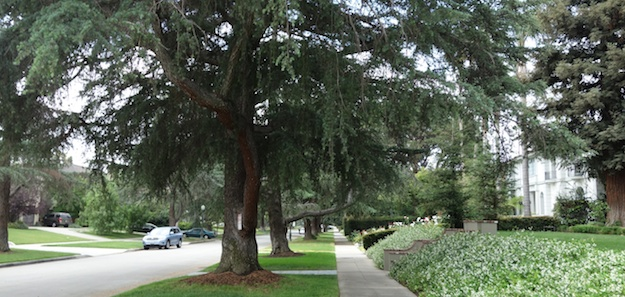 Trees along our parkways provide cooling shade, produce oxygen and give the neighborhood a green canopy of beauty.