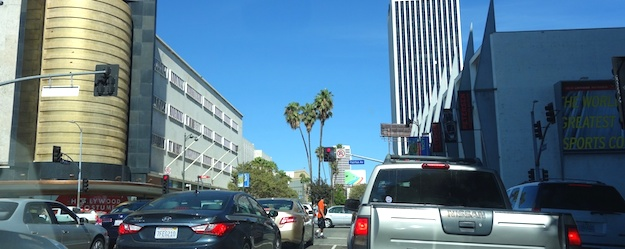 wilshire blvd tree removal