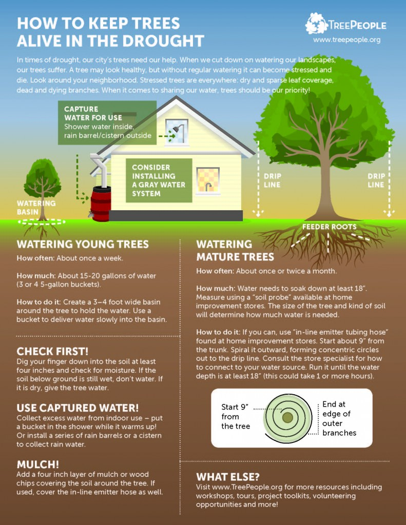 TreePeople - How to Keep Trees Alive in the Drought (1)