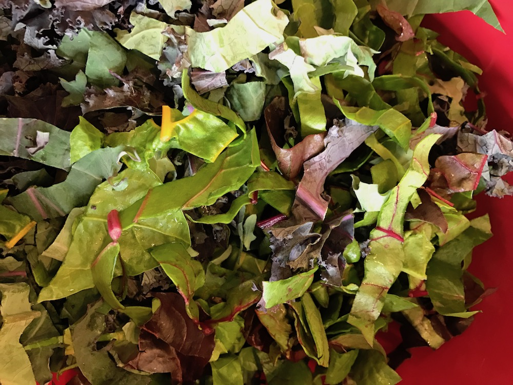 Greens chopped into ribbons and stems removed