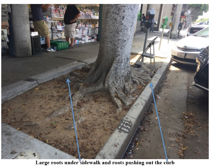 (photo from Greg Monfette Tree Case Management)