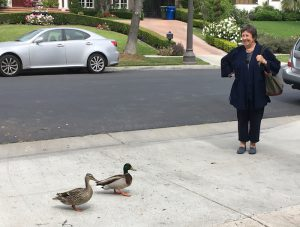 Two ducks greet garden designer Judy Horton