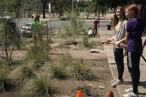Larchmont Charter native plantings