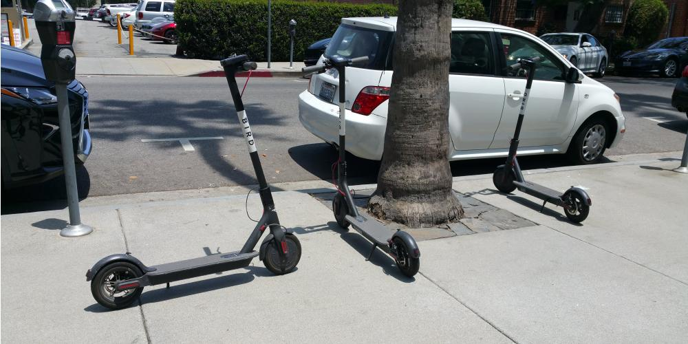 A Field Guide To The Bird Scooter Issue Larchmont Buzz Hancock